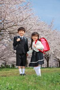桜並木で手をつなぐ新一年生の写真素材 [FYI04073632]