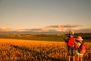 夕暮れの麦畑を見つめる兄妹の写真素材 [FYI04073654]