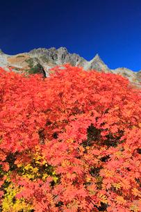 ナナカマドの紅葉と涸沢岳の写真素材 [FYI04073714]