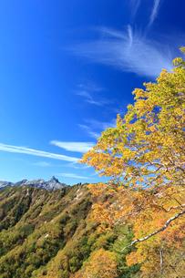 ダケカンバの黄葉と槍ケ岳の写真素材 [FYI04073728]