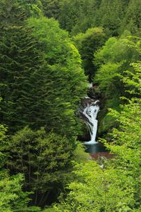 新緑のおしどり隠しの滝の写真素材 [FYI04073765]
