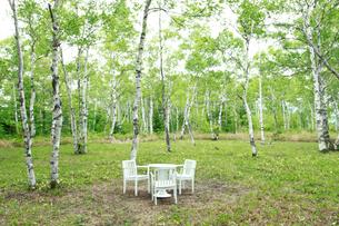 新緑の白樺林とテーブルセットの写真素材 [FYI04073794]