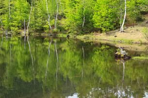 新緑のまいめの池の写真素材 [FYI04073807]