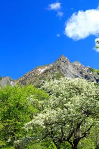コナシと明神岳の写真素材 [FYI04073907]