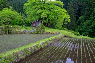 根羽村の柿の木と小屋の写真素材 [FYI04074099]