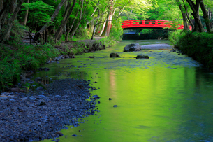 新緑の小国神社 太鼓橋の写真素材 [FYI04074229]