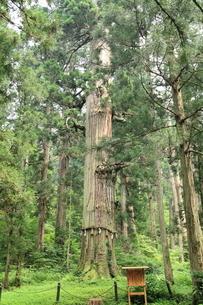 羽黒山 爺杉の写真素材 [FYI04074262]