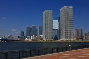 豊洲公園から望む晴海周辺ビル群の写真素材 [FYI04074284]