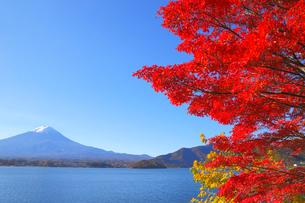 モミジと富士山の写真素材 [FYI04074339]