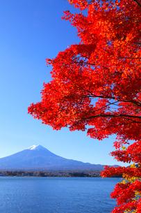 モミジと富士山の写真素材 [FYI04074341]