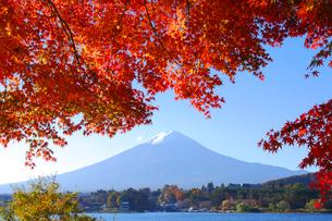 モミジと富士山の写真素材 [FYI04074342]