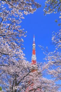 東京タワーとサクラの写真素材 [FYI04074346]