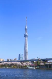 東京スカイツリーと桜の写真素材 [FYI04074348]