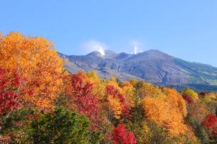 十勝岳の紅葉の写真素材 [FYI04074360]
