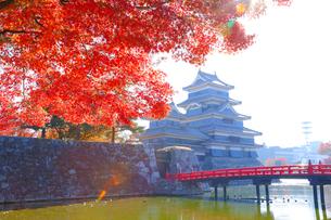 松本城と紅葉の写真素材 [FYI04074369]