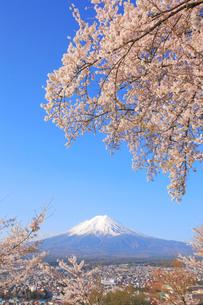 富士山と桜の写真素材 [FYI04074377]