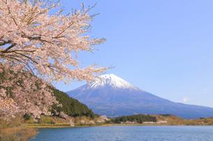 田貫湖の桜の写真素材 [FYI04074385]