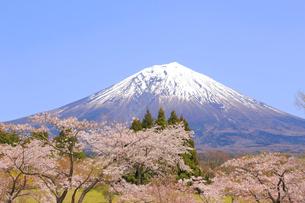 富士山と桜の写真素材 [FYI04074388]