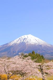 富士山と桜の写真素材 [FYI04074390]