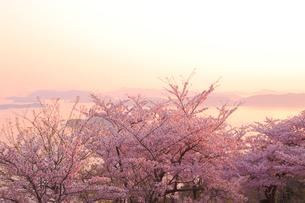 王子が岳の桜の写真素材 [FYI04074423]