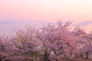 王子が岳の桜の写真素材 [FYI04074424]