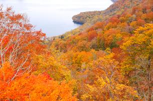 十和田湖の紅葉の写真素材 [FYI04074452]