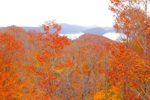 十和田湖の紅葉の写真素材 [FYI04074457]