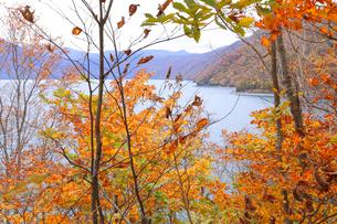 支笏湖の紅葉の写真素材 [FYI04074459]