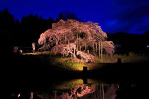 中島の地蔵桜の写真素材 [FYI04074460]
