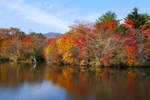 八方湖の紅葉の写真素材 [FYI04074475]