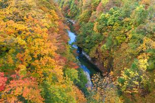 小安峡の紅葉の写真素材 [FYI04074477]