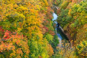 小安峡の紅葉の写真素材 [FYI04074479]