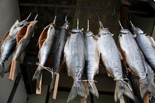 サケ干し 塩引鮭の写真素材 [FYI04074501]