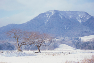 雪が積もった上堰潟公園から望む角田山の写真素材 [FYI04074504]