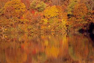 水面に映る道院高原の紅葉 の写真素材 [FYI04074551]