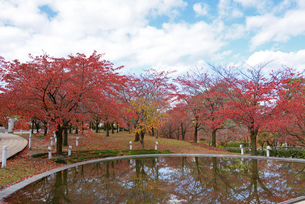 白山公園の空中庭園の秋の風景の写真素材 [FYI04074578]