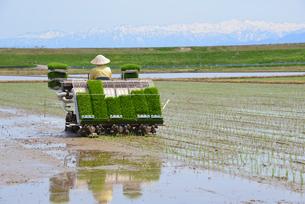 新潟の農作業風景の写真素材 [FYI04074588]