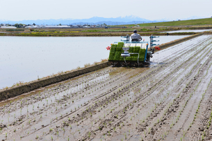 新潟の農作業風景の写真素材 [FYI04074607]