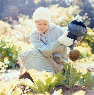 畑の野菜に水をやる日本人女性の写真素材 [FYI04076517]