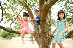 木の上の子供達の写真素材 [FYI04076724]