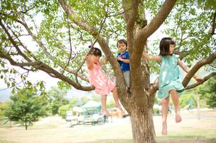 木の上の子供達の写真素材 [FYI04076725]