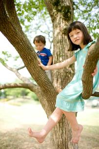 木の上の子供達の写真素材 [FYI04076726]
