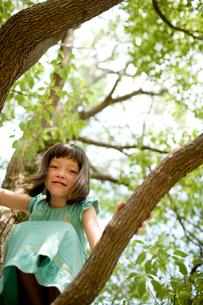 木の上の女の子の写真素材 [FYI04076727]