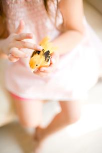 おもちゃの鳥をなでる女の子の手元の写真素材 [FYI04076746]