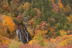 紅葉の森と王滝の写真素材 [FYI04076912]