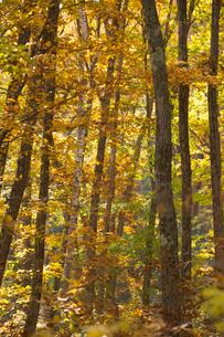 紅葉の樹々の写真素材 [FYI04076920]