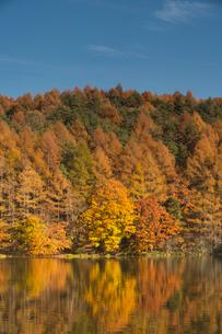 秋の御射鹿池の写真素材 [FYI04076921]