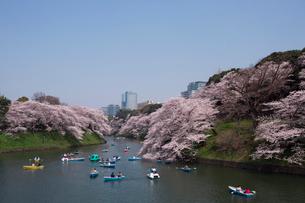 桜が満開の千鳥ヶ淵の写真素材 [FYI04076949]