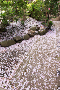 桜散る雨宝院の写真素材 [FYI04077197]