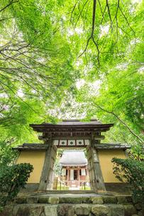 寂光院山門と青モミジの写真素材 [FYI04077203]